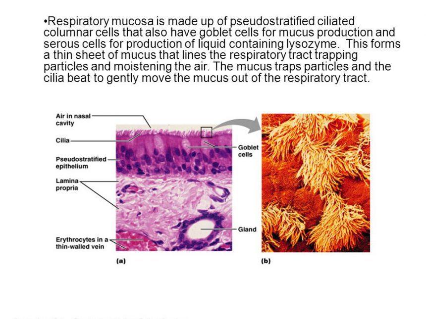 以中醫傳統的點鼻術(鼻黏膜燒灼術),治療肥厚性鼻炎之商榷