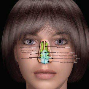 「身體髮膚,受之父母」~評「神經切除術治療過敏性鼻炎」